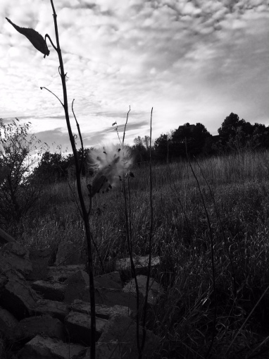 Milkweed, Nebraska sky